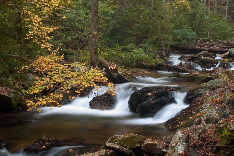 smith creek 5864.jpg