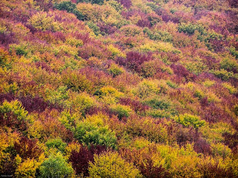 jesen (1 of 35).jpg