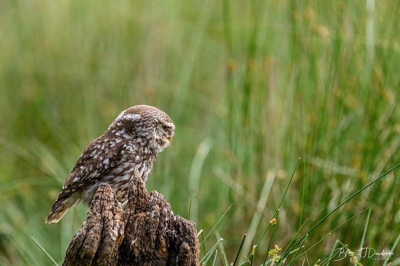 The Little Owl Shoot-6650.jpg