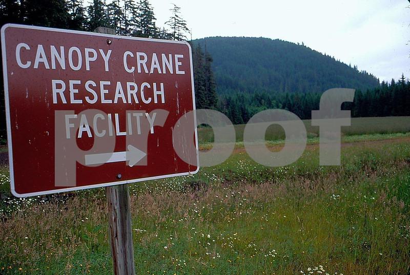 Canopy crane 1.jpg