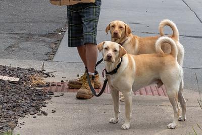 2020 08 03: Walking Around the Neighborhood