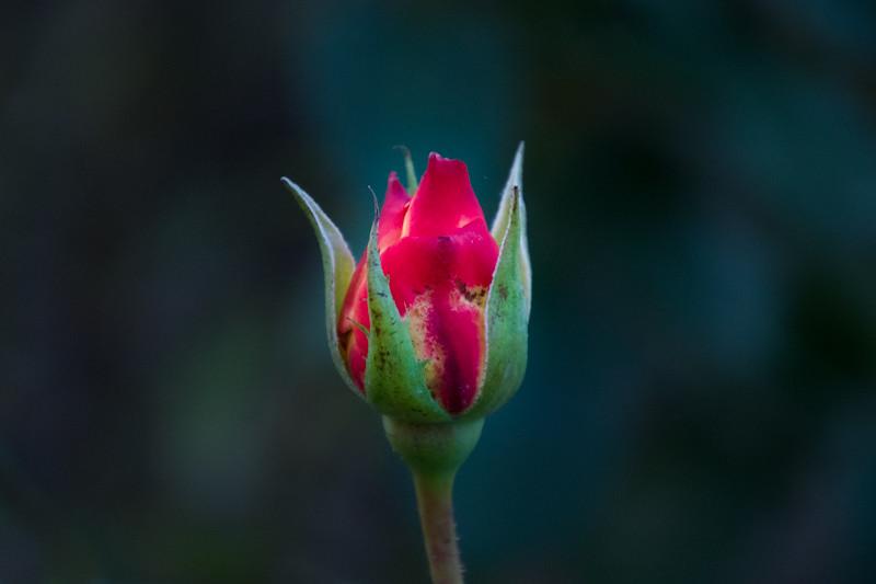 December 1  - Shining floral bulb.jpg