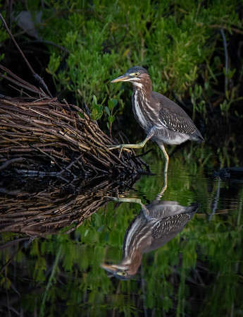 Merritt Island National Wildlife Refuge - June 11, 2020