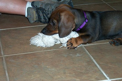 """C"" litter - Gilda and Alfi's pups"