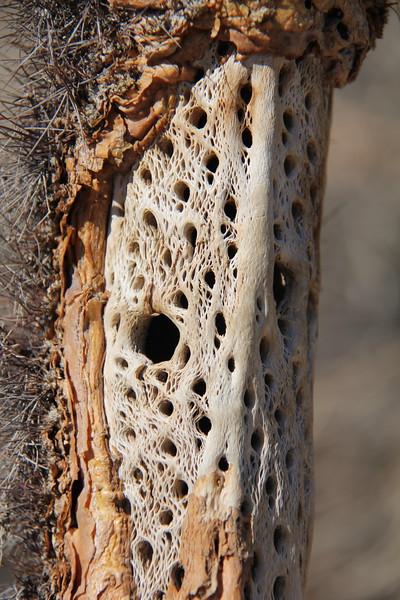 20190524-21-SoCalRCTour-Cholla Cactus Garden Trail-Joshua Tree NP.JPG