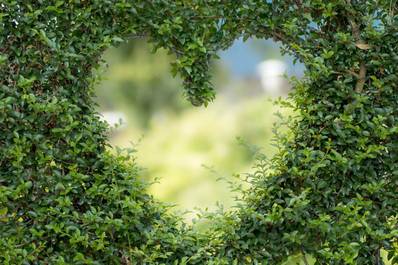 Heart Shaped Hedge Wall.png