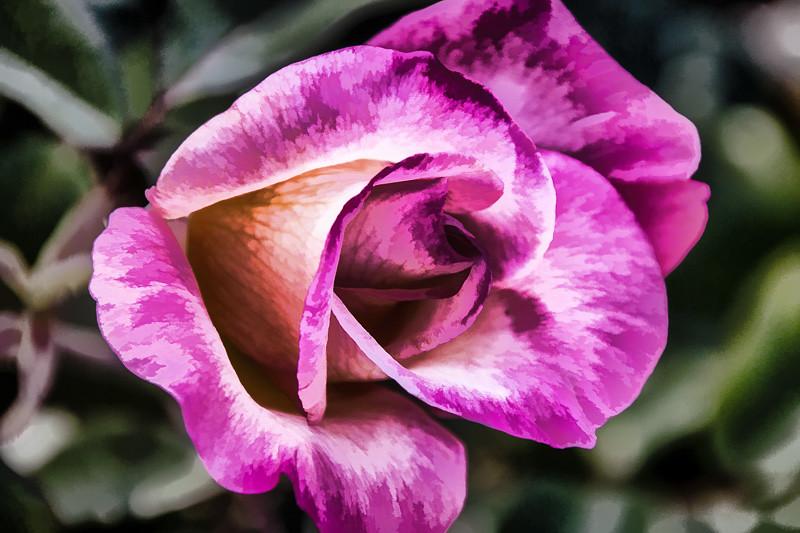 July 2 - Rose.jpg
