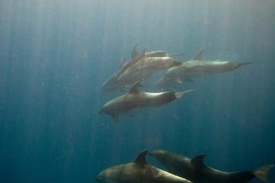 Bonaire Dolphins - Video