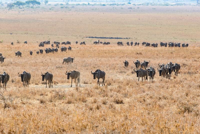 Africa - 102016 - 7537.jpg