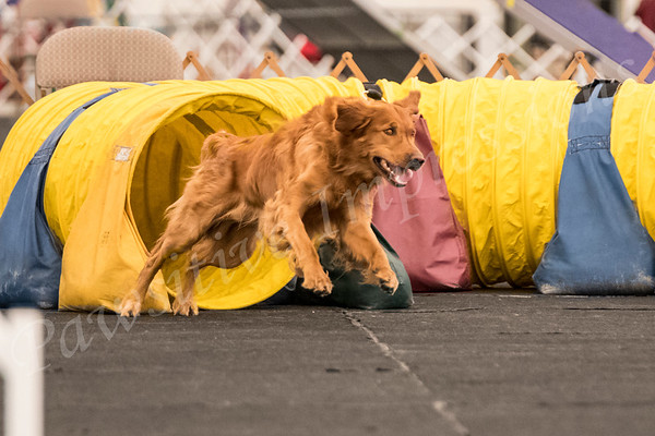 AKC Agility all Novice classes Friday 4 27 18