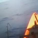 A shark hook up on kayak  off the coast of the Big Island of Hawaii