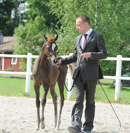 Filly foals