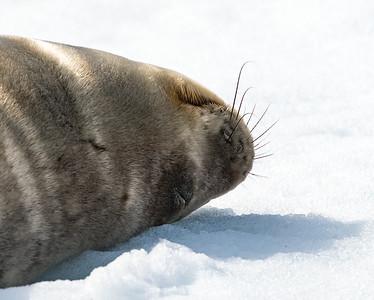 Antarctica Animals