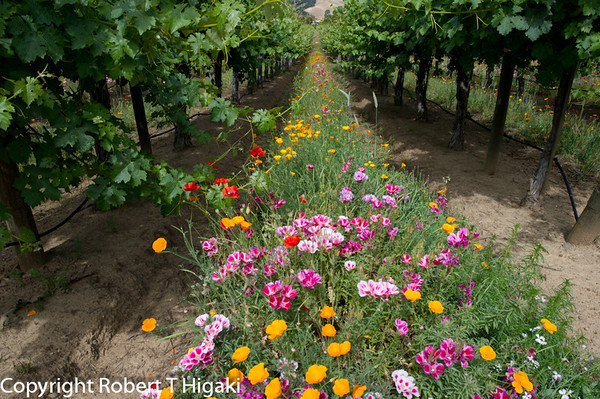 Jason-Stephens Winery flowers