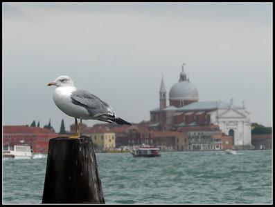 Venezia 2008 - Riva degli Schiavoni