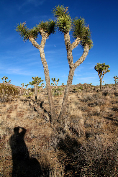 Joshua Tree 45