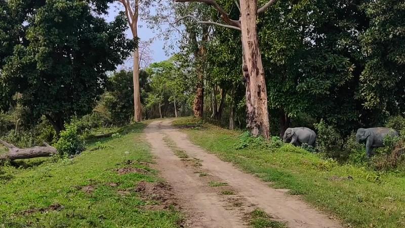 Kaziranga-March-2020