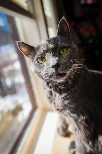 cats-feb-2013-1-2.jpg
