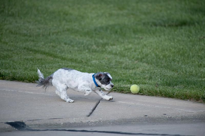 LuLu - Brady - Cooper Play Friends (88 of 109).jpg