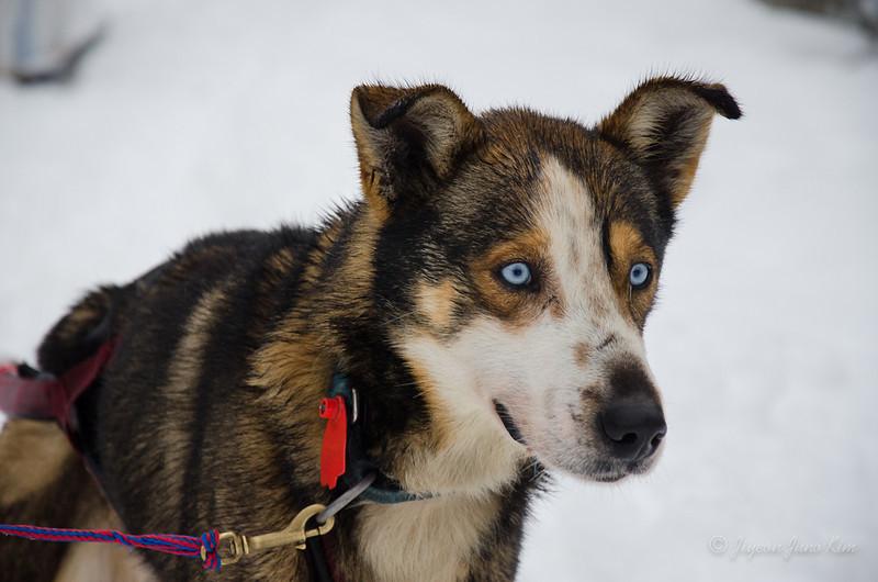 USA-Alaska-Anchorage-0073.jpg