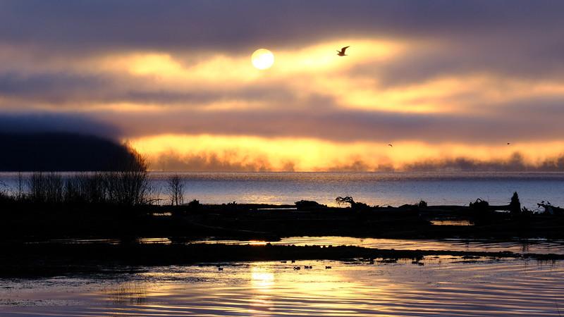 hood-canal-sunrise-bird.jpg