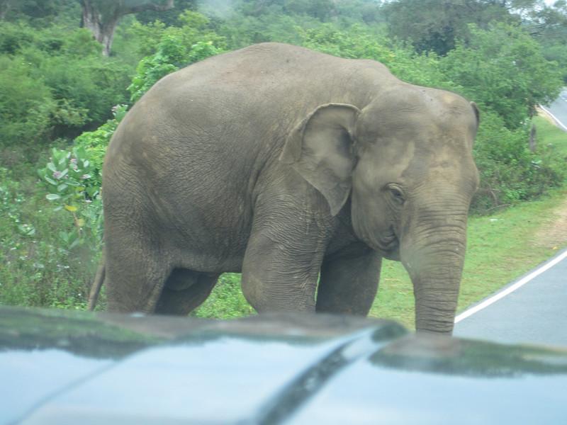 Sri_Lanka17-9604.jpg