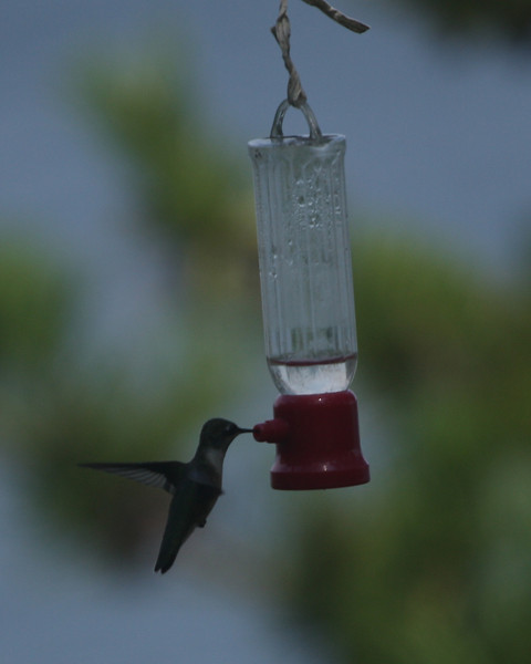 Baiting Hollow Hummingbird Sanctuary