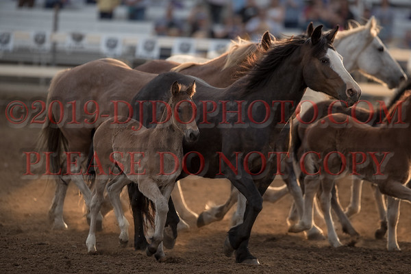 2019 PRCA Rodeo's