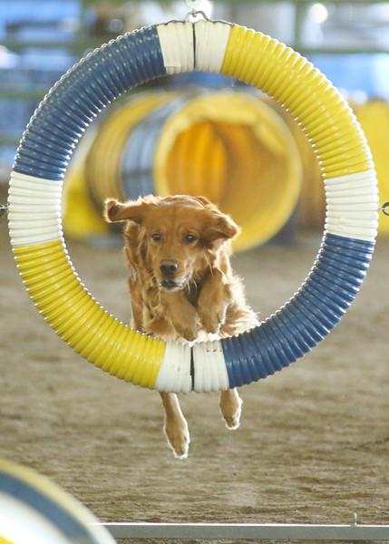 10-31-2015 Border Terrier-2404.jpg