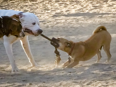 November 12: Tug of War