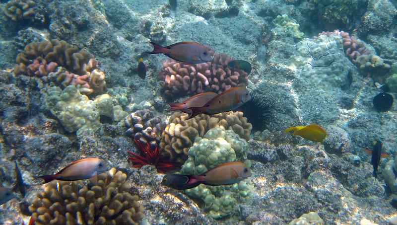 438- 20080416- Hawaii 20-Snorkelling IMG_0608.jpg