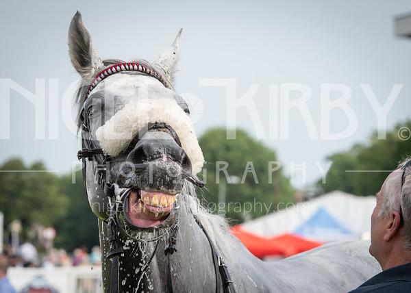 Worcester Races - Mon 8 July 2019