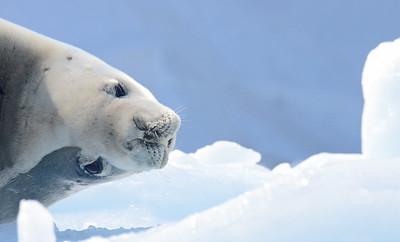Antarctica  slideshow