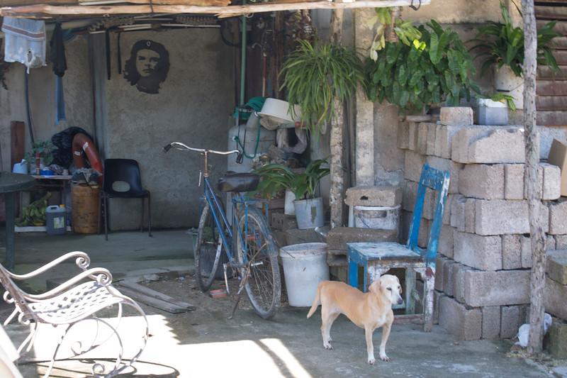 Che and Perro.