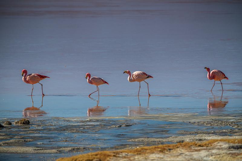 Salt Flats tour - Laguna Colorada - Red Lagoon-2482.jpg
