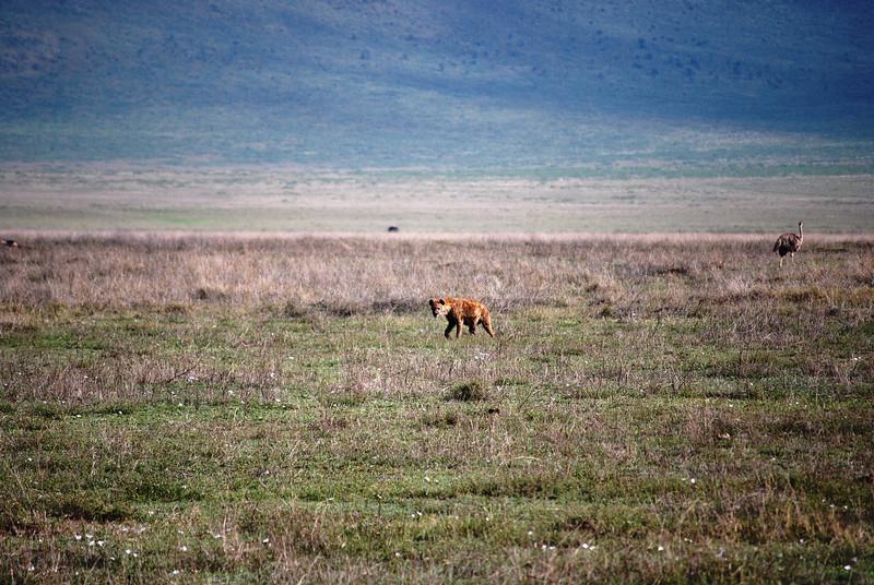 Ngorongoro (25).JPG
