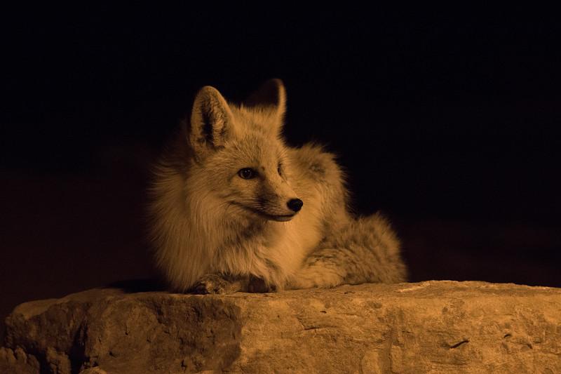 Fox Monument Valley AZ 2020-2.jpg