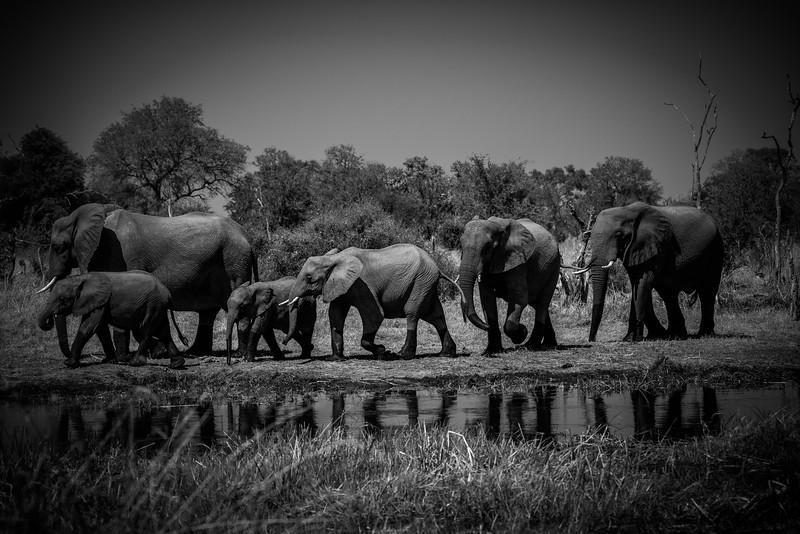Botswana_June_2017 (3250 of 6179).jpg