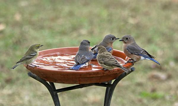 Le Avian Rural Day Spa