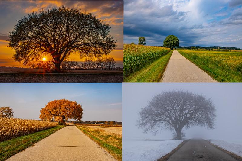 Weary road tree four seasons3.jpg