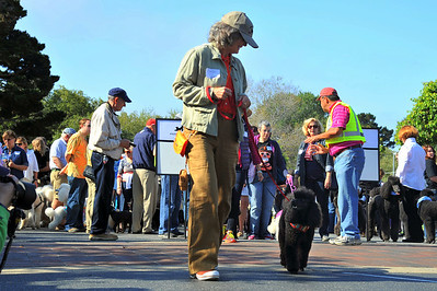 Poodle Day 2012-Parade 1