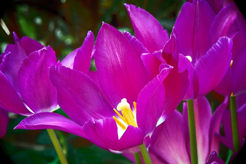 Flowers-10.jpg