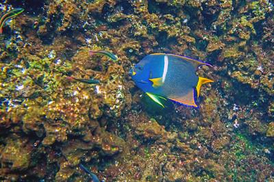 Galapagos Underwater 2015