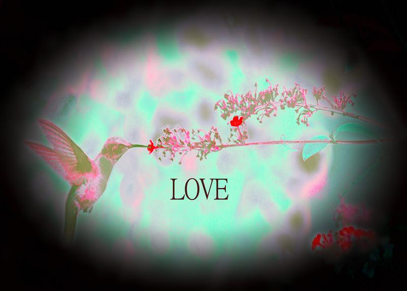 Love Bird .jpg