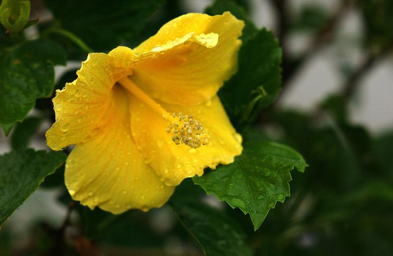 clip-015-flower-dsm-08aug06-2801.jpg