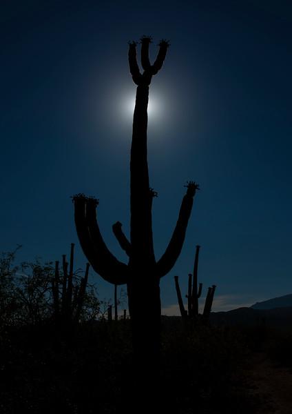 Arizona_090617_1018.jpg