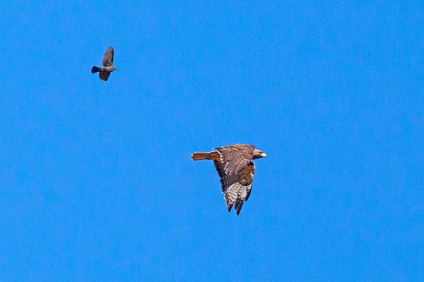 OrnithologyField Trip - Pt. Reyes June 2020