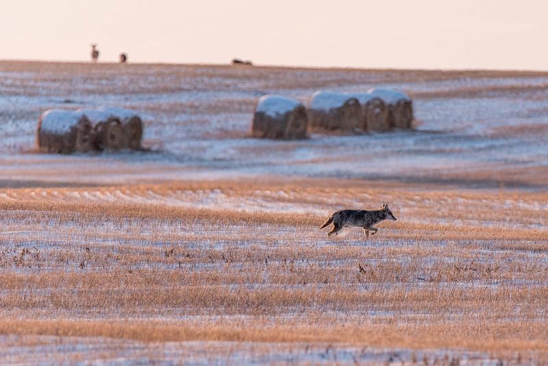barley 29.jpg