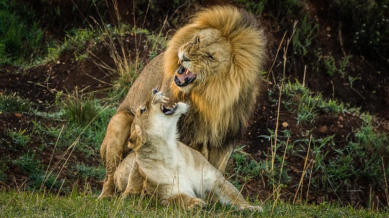 Lions-0130.jpg