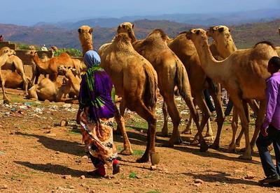 Babille, Camel Market